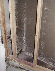 Mold behind walls. Mold is found both indoors and outdoors. Mold can enter your home through open doorways, windows, vents, and heating and air conditioning systems. Mold in the air outside can also attach itself to clothing, shoes, bags, and pets can and be carried indoors. Mold will grow in places with a lot of moisture, such as around leaks in roofs, windows, or pipes, or where there has been flooding. Mold grows well on paper products, cardboard, ceiling tiles, and wood products. Mold can also grow in dust, paints, wallpaper, insulation, drywall, carpet, fabric, and upholstery. Inside your home you can control mold growth by: • Controlling humidity levels; •Promptly fixing leaky roofs, windows, and pipes; • Thoroughly cleaning and drying after flooding; •Ventilating shower, laundry, and cooking areas.
